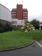 中央図書館とハイテク専門学校