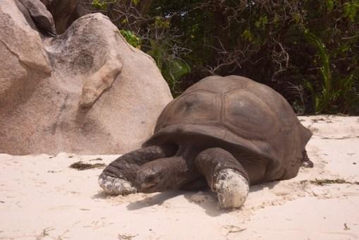 Seychelles - Impressions - 6