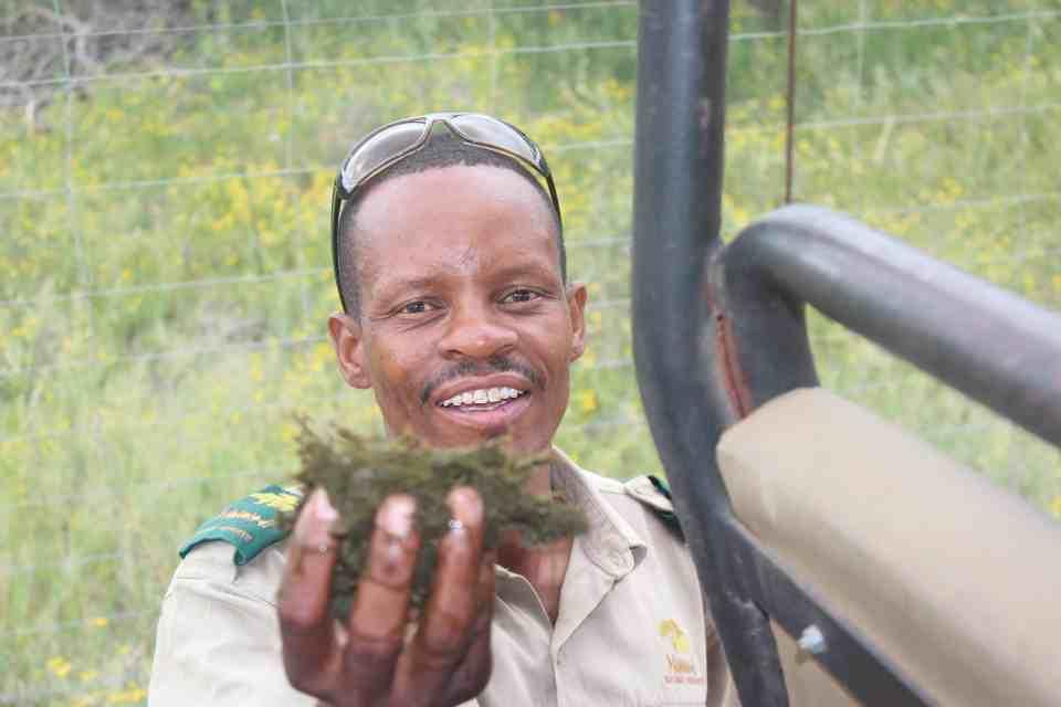 Botswana - safariparker i Gaborone