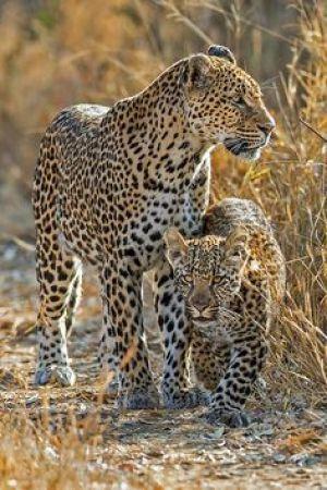 Vi vil gerne på safari - gensyn med Afrika