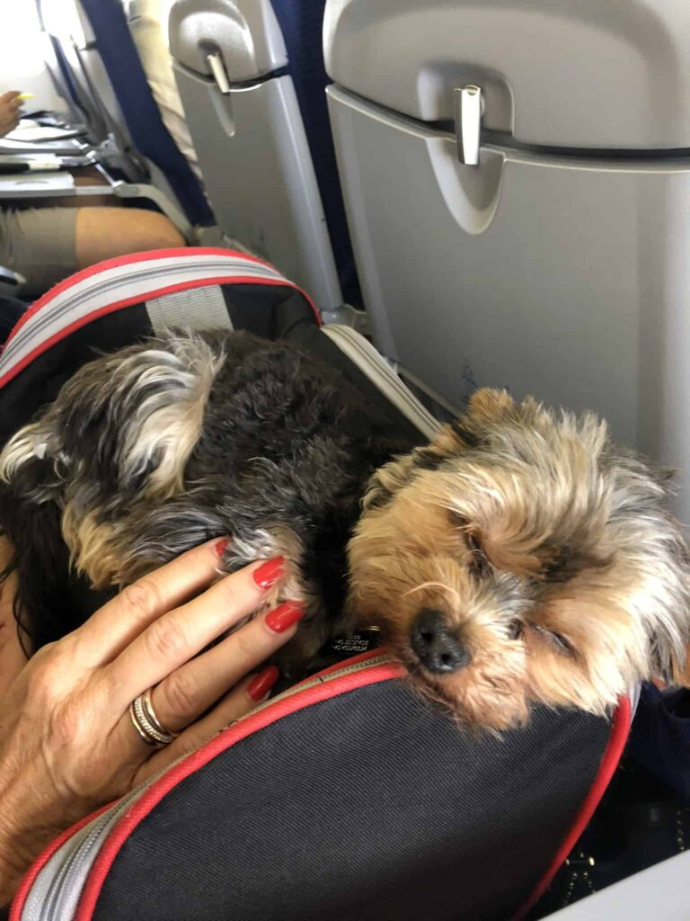 Børn på fly - eller hunde?