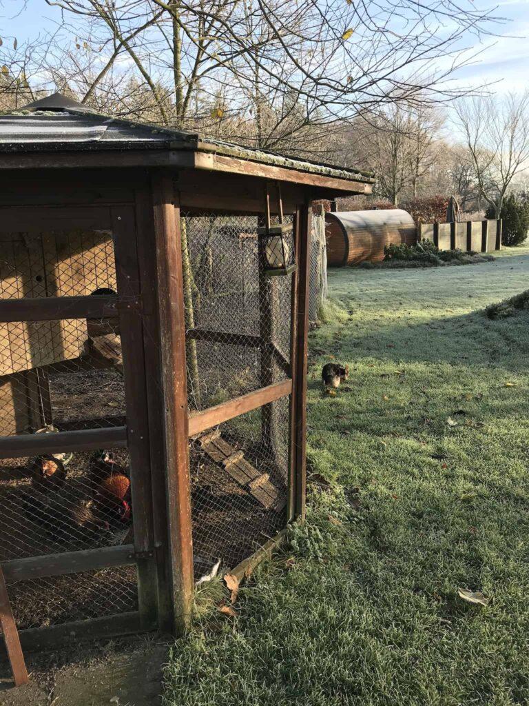 Vores nye have og hønsene - spærret inde!