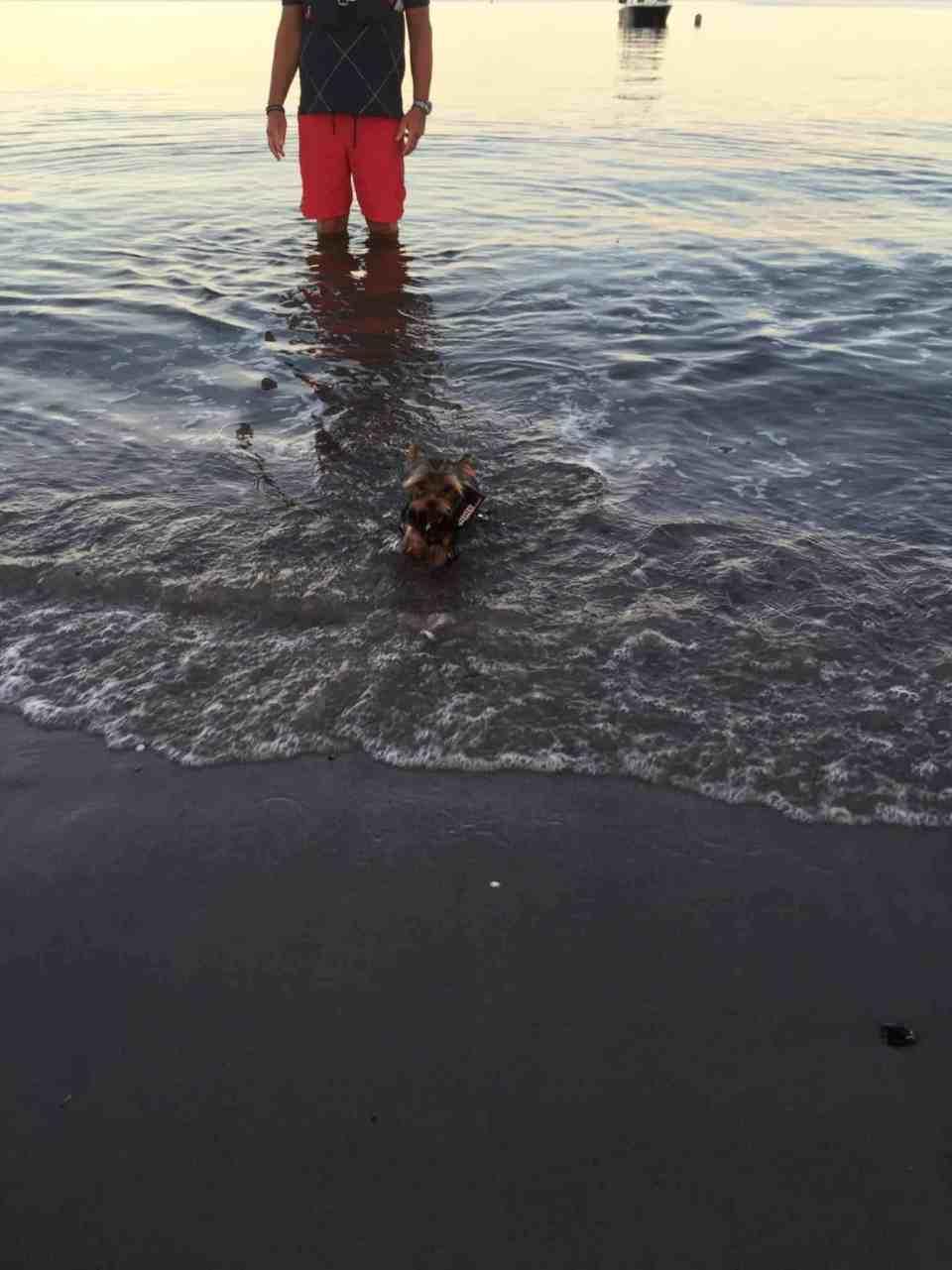 Aftensejltur i dingy'en - OG en svømmetur!