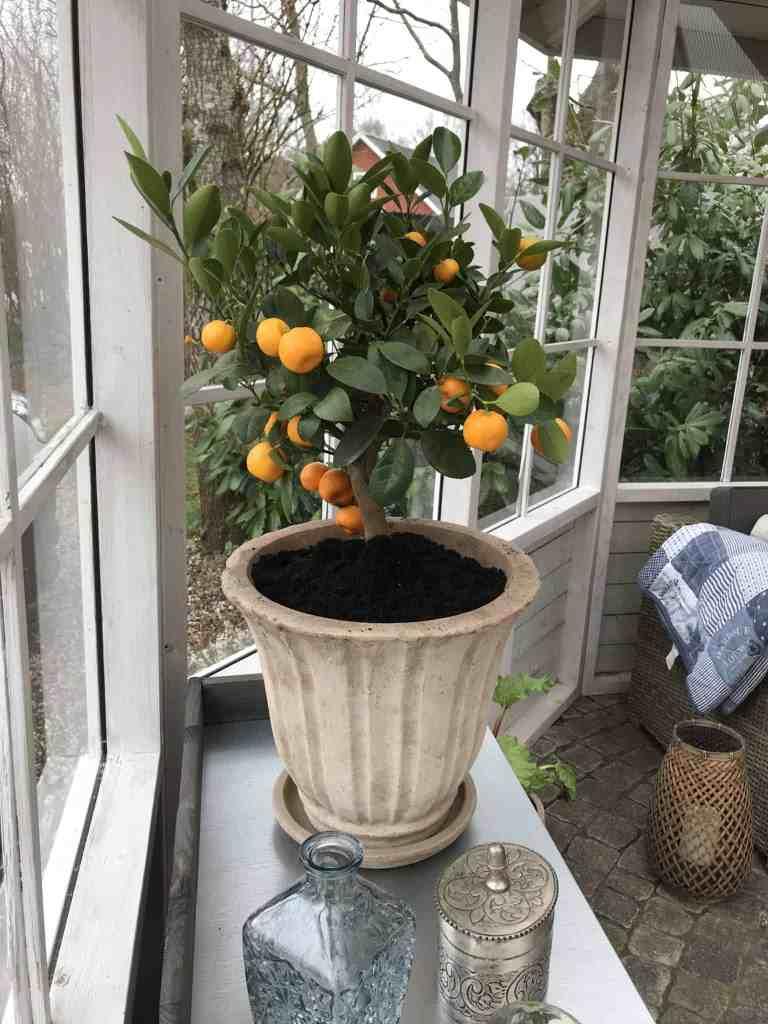 Orangeriet er færdigt nu!