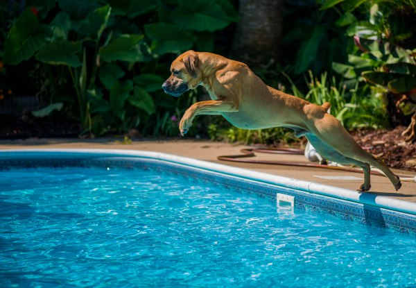 Keep Your Pets Cool During Summer Heatwaves!