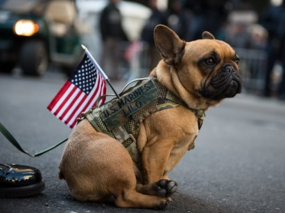 Lilo Observes NYC's 2017 Veterans Day Parade