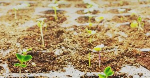 Not Sure Where to Start? Here Are 7 Ways to Get Seeds for Your Garden