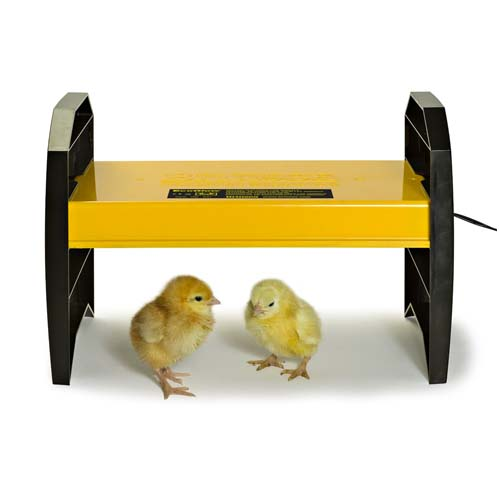 Chick Brooder
