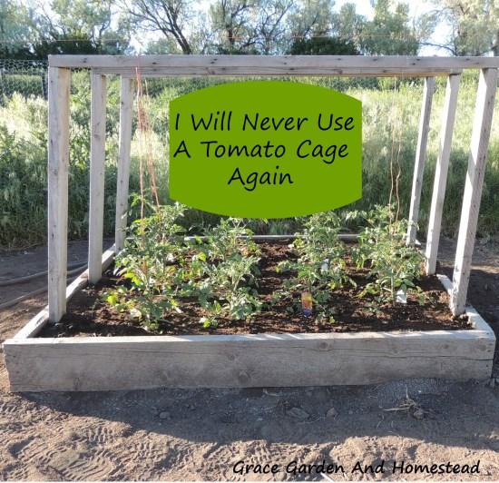 32 DIY Tomato Trellis Cage Ideas for Healthy Tomatoes