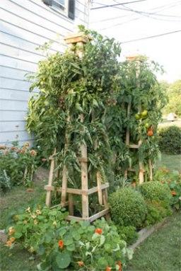 tomato tower
