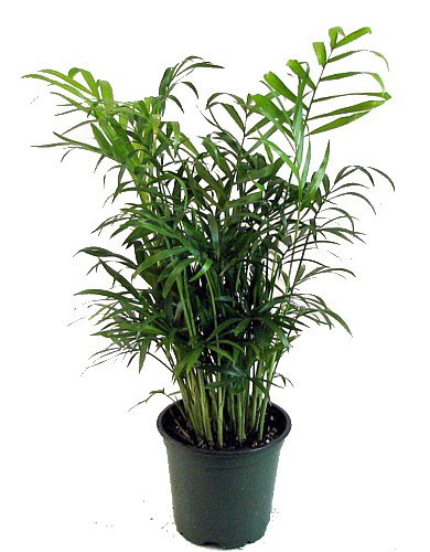23 low light houseplants that are easy to maintain even if for Plants that are easy to maintain