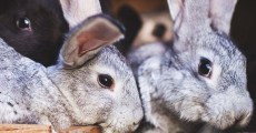 How to Raise Rabbits for Meat: The Ultimate Guide for Beginners