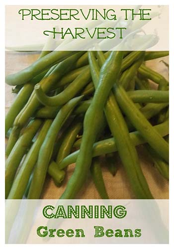 canning-green-beans
