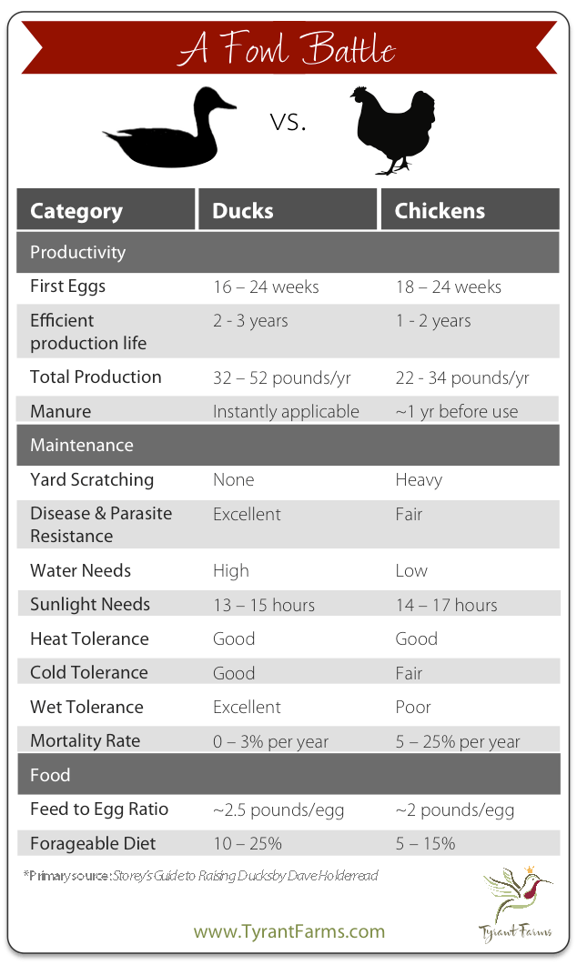 duck-vs-chicken