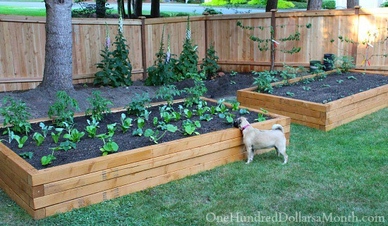 Beau This Tutorial Is All About Creating Inexpensive Raised Garden Beds To Help  Your Family Grow More Of Your Own Food. Growing Your Own Food Is An  Important ...
