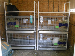 50 diy rabbit hutch plans to get you started keeping rabbits for Pvc rabbit cage