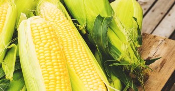 The Beginner's Guide to Growing Corn: All You Need To Know About Planting Corn