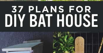 37 Free DIY Bat House and Bat Box Plans