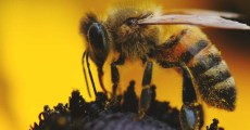 8 Things That Are Killing the Bees (and How Can YOU Save Them)