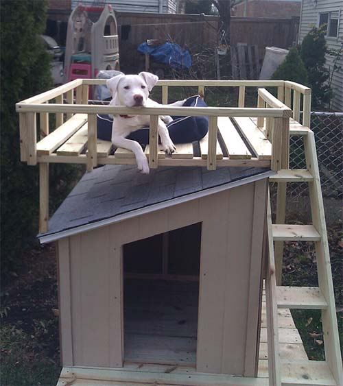 dog-house-with-roof-top