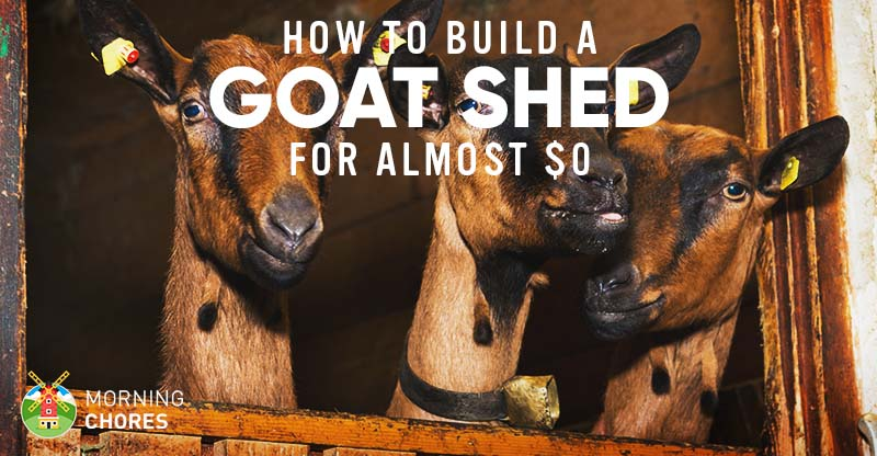 How To Build A Goat Shed With A Loft Bed For Almost 0