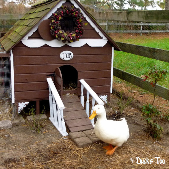 37 free diy duck house coop plans ideas that you can for Chicken coop kits for 12 chickens