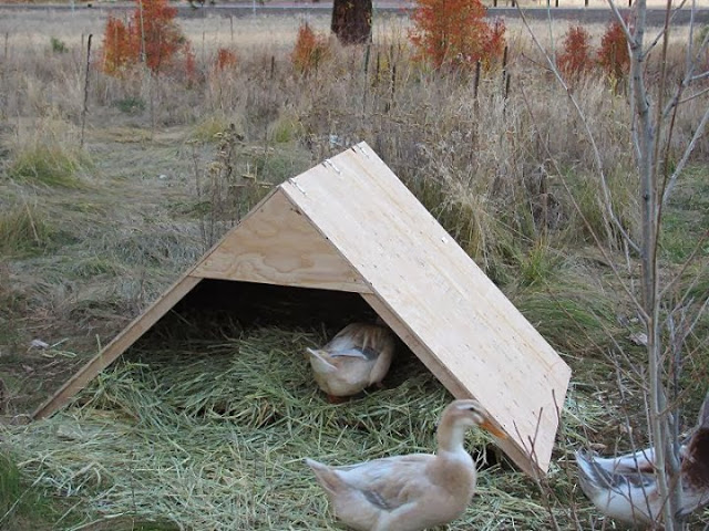 37 free diy duck house coop plans ideas that you can for Can ducks and chickens share a coop