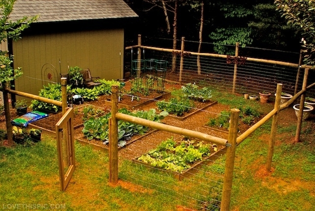 Via Brit.co. This Is Another Design For A Vegetable Garden Fence.