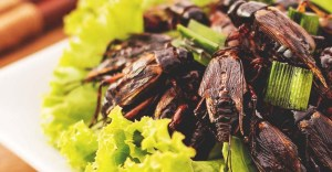 Cricket Farming: 7 Effortless Steps to Raise Crickets for Profit/Food