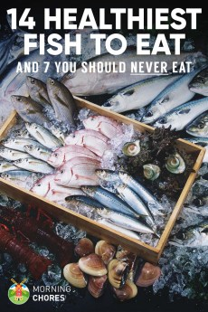 49 free diy workbench plans ideas to kickstart your for Healthiest fish to eat