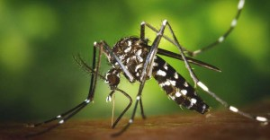 6 Best Insect Repellent to Get Rid of Mosquitoes, Ticks, Bugs, etc.