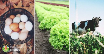 How to Become a Farmer in 7 Steps Even If You Know Nothing about It