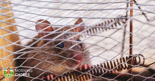 7 Best Mouse Trap Reviews for Indoor and Outdoor Rodent Elimination