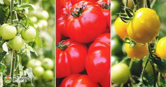 15 of the Absolute Best Tomato Varieties You Should Plant This Summer