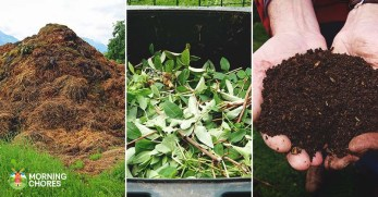 3 Different Compost Making Techniques (and the Advantages of Each)