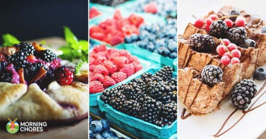 30 Delicious Blackberry Recipes You Should Try at Least Once