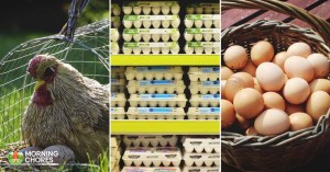 9 Huge Differences Between Free Range and Store Bought Eggs