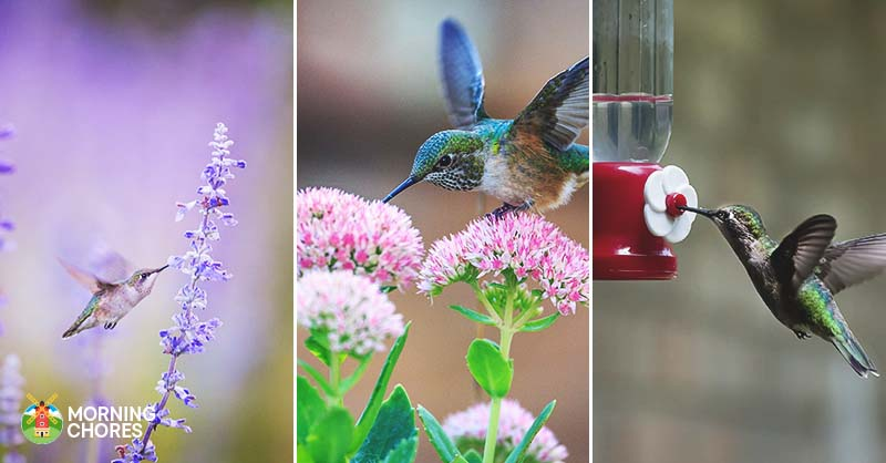 How To Attract Hummingbirds To Your Yard This Summer In 15 Easy Ways