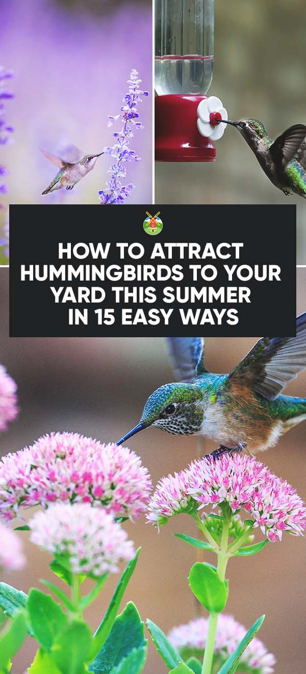 Do You Think This Is A Lot Of Work Just To Keep A Hummingbird Around? Do  You Do Something Different To Draw Hummingbirds To ...