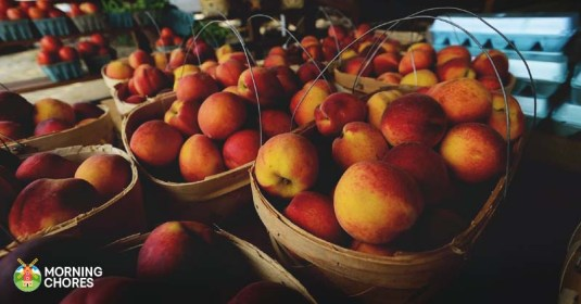 7 Simple Methods to Preserving Your Peach Harvest