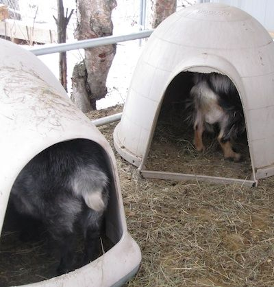 23 Inspiring Goat Sheds Amp Shelters That Will Fit Your