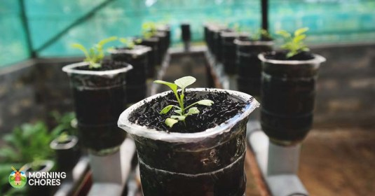 10 Benefits of Hydroponic Gardening You Never Knew About