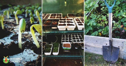 10 Easy to Follow Steps to Gardening on a Budget