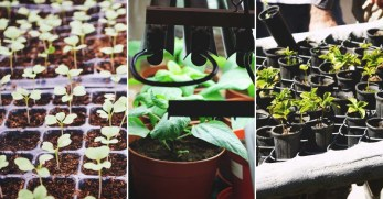 11 Frugal Seed Starting Hacks to Get Your Garden Going