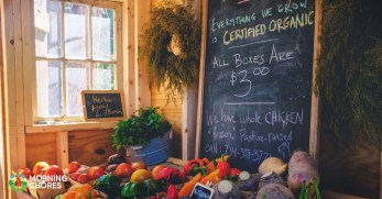 Why You Should Have a Homestead Business Plan and the 7 Easy Steps