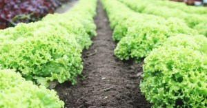 8 Best Plant Food Reviews: The Formula to a Healthy, Abundant Harvest