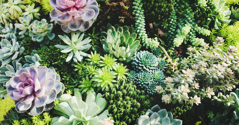 29 Types Of Succulent Plants For Your Terrarium Indoor
