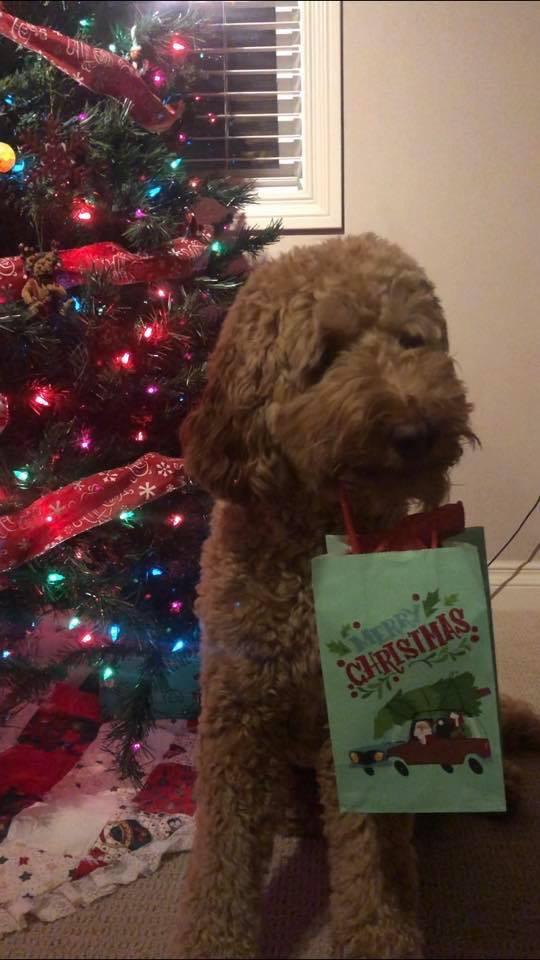 Barkley Christmas