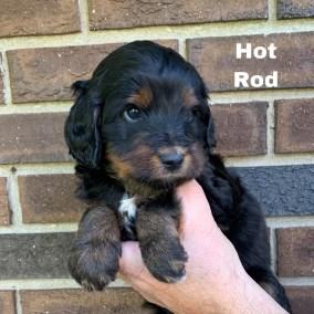 Hot Rod 4 Weeks