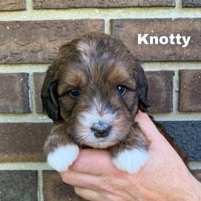 Knotty 4 Weeks